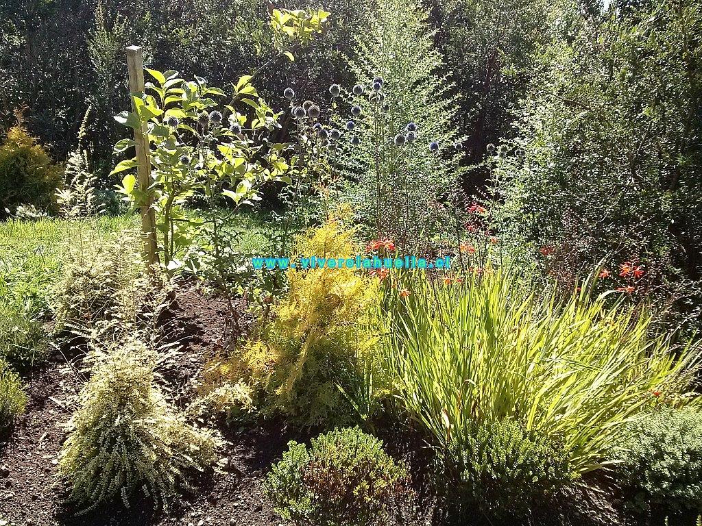 Proyectos for Jardin que planter en janvier