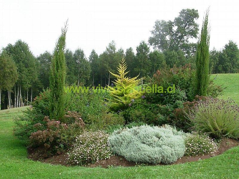 jardines con atractivo todo el ao